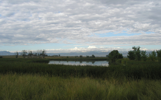 Bulrush Wetlands